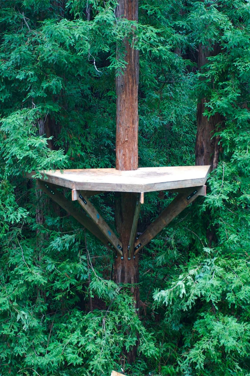 Awesome Wedding Treehouse U2013 Platform Sneak Peak