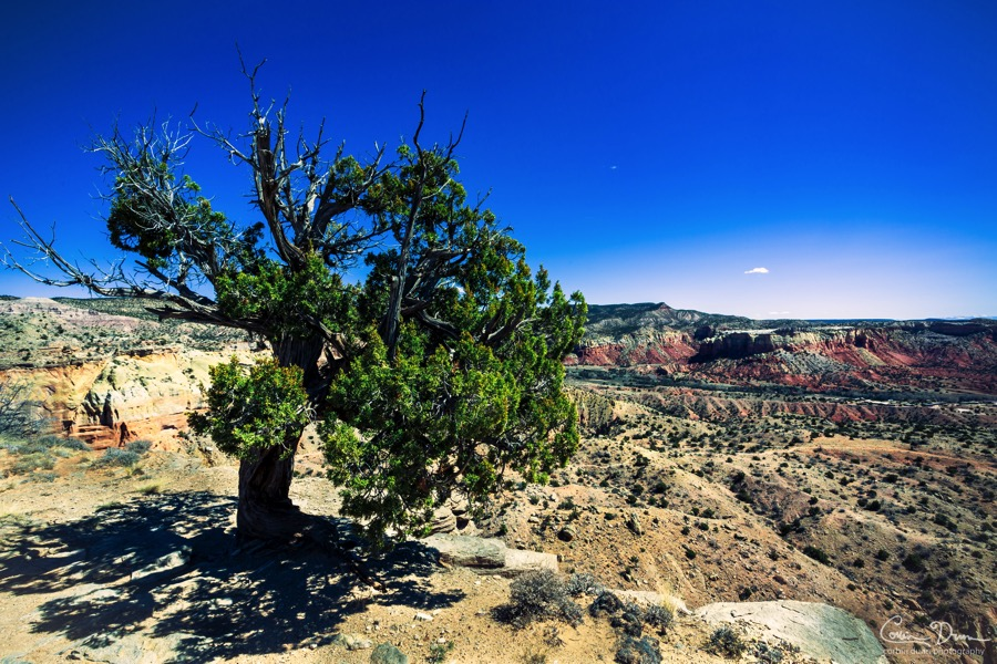 Ghost Ranch Green Tree  New Mexico   W1A4773