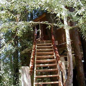 The Second Treehouse