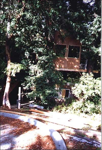 Treehouse29