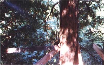 Treehouse8