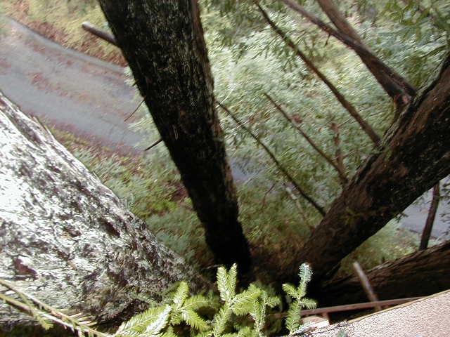 Treehouse lookingdown