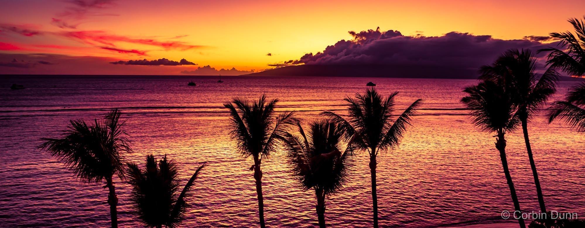 Palm Tree Pano  UW1A6163
