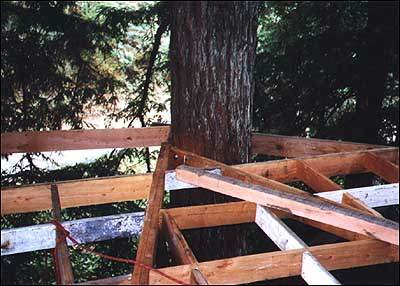 Tree House Design And Construction on tree homes for rent in virginia, rock wall construction, light house construction, mountain house construction, santa house construction, squirrel house construction, green house construction, ocean house construction, tent construction, deck construction, art house construction, florida house construction, love house construction, tree houses for adults, tree houses to live in, tree flooring, fire house construction, owl house construction, grass house construction, treehouse platform construction,